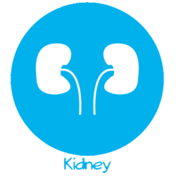 Kidney Conditions Treated by Urology Associates
